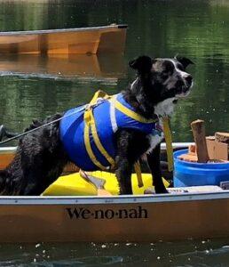 Pit Bull Mix Aggie Wenonah Champlain Canoe