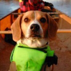Beagle Wenonah Boundary Waters Canoe